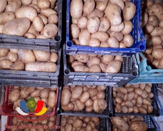 Cách bảo quản khoai tây lâu 1 năm